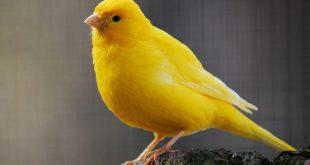 صور انواع الطيور واسمائها , هل الطيور اقرب للزواحف ام الحيوانات