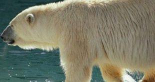 حيوانات يغطي جسمها الفرو , اكثر حيوان كثافه في الفرو علي مستوي العالم