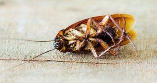 صور مكافحة الحشرات المنزلية بدون مبيدات , نظافة المنزل من الحشرات ازاي تعالي اقلك
