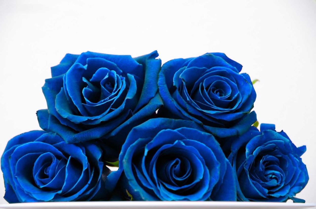 صورة اجمل ورد ازرق , ورود زرقاء رائعة