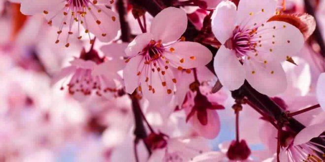 صورة اجمل زهرة في العالم , اشهر الزهور