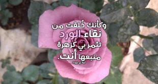 صور كلام على الورد , عبارات علي ورق الورد