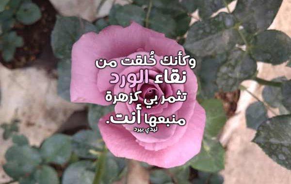 صورة كلام على الورد , عبارات علي ورق الورد
