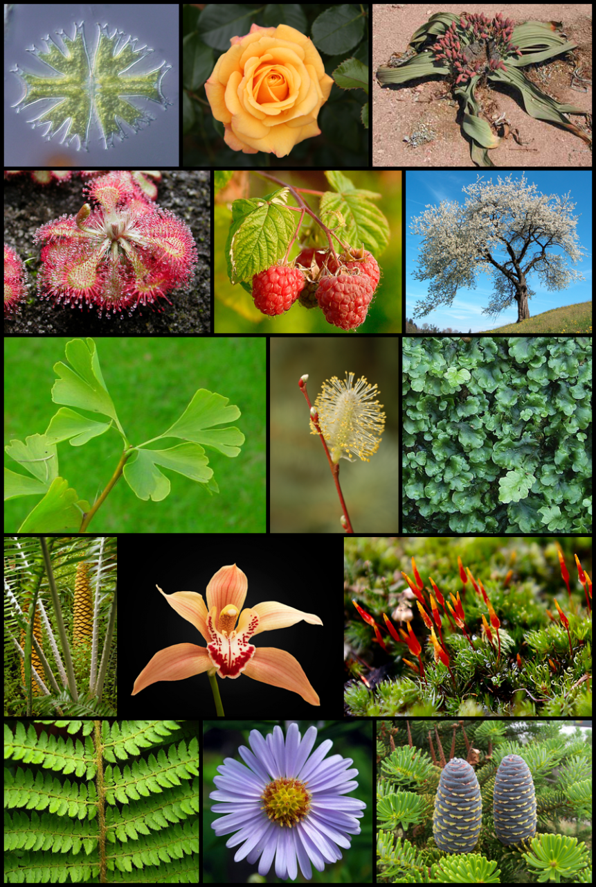 صور بحث عن النباتات , اروع النباتات