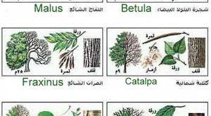 صورة انواع الاشجار واسمائها , معلومات عن الاشجار