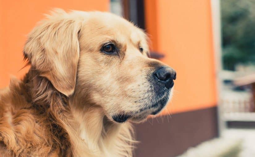صورة رؤيه الكلاب في الحلم , الكلاب في المنام و تفسيرها