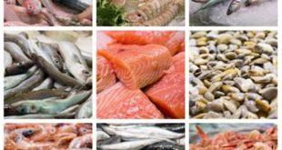 صور افضل انواع الاسماك , معلومة تهمك هذه الاسماك هي الافضل