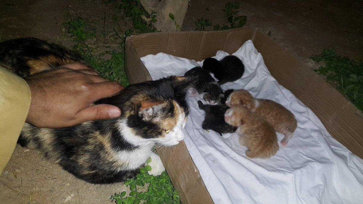 صورة رؤية اطعام القطط في المنام , تفسير الحلم باطعام قطة