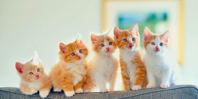 صور رؤية اطعام القطط في المنام , تفسير الحلم باطعام قطة