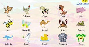 صورة اسماء الطيور بالانجليزي , تعرف باللغة الانجليزية اسماء الطيور