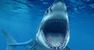 صورة معلومات عن القرش , ماذا تعرف عن القرش