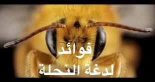 صورة اضرار لسع النحل , علاج من لسعه النحل