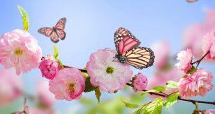 صورة خلفيات صور ورد , عيش في عالم مزهر مع خلفيات الورود الرائعة