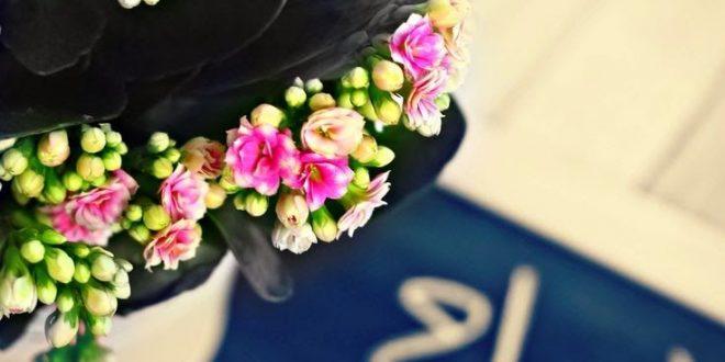 صور اجمل الصور صباح الخير فيس بوك , صباح الخير يا فيسبوكاوية اجمل صور لك ولي