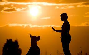 صورة ما معنى رؤية الكلاب في المنام , هتصدم من الرؤية