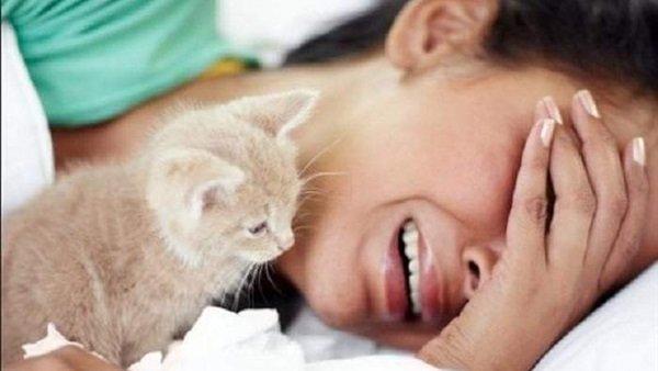 صورة ما هو داء القطط , اعراض ظهور مرض الهر