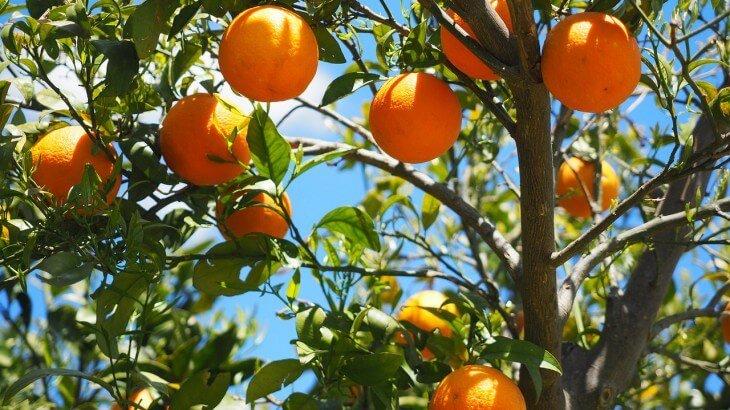 صورة تفسير حلم البرتقال , اقوى تفسير لحبات البرتقال فى المنام