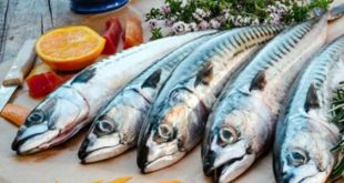 فوائد سمك الماكريل , علاج فعال لتقوية الاعصاب